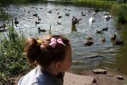 Всемирные Дни наблюдений птиц