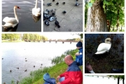 Международные дни наблюдения птиц